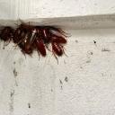 Dhaka Pest Control